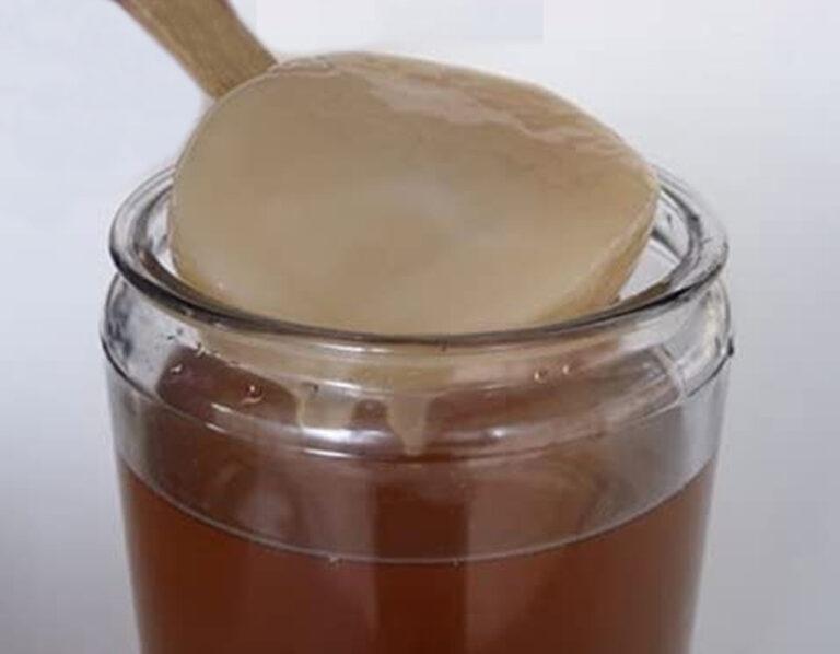 scoby - hongo kombucha