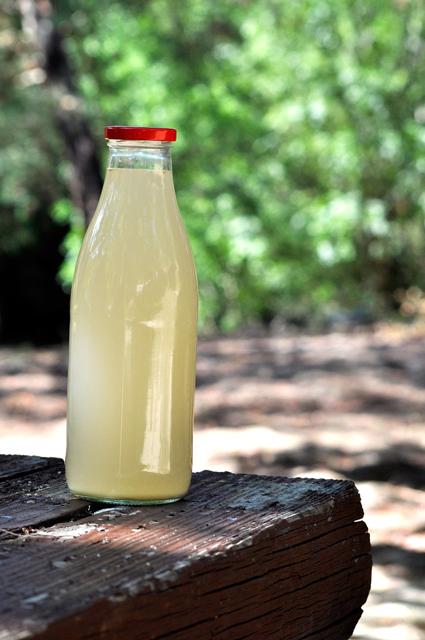 cerveza-de-jengibre-bebidas-fermentadas
